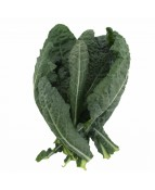 KALE TUSCAN (BLACK) - 250GM / PKT